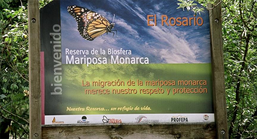 El Rosario Mariposa Monarca - Epler Wood Int - GreenMoney Journal
