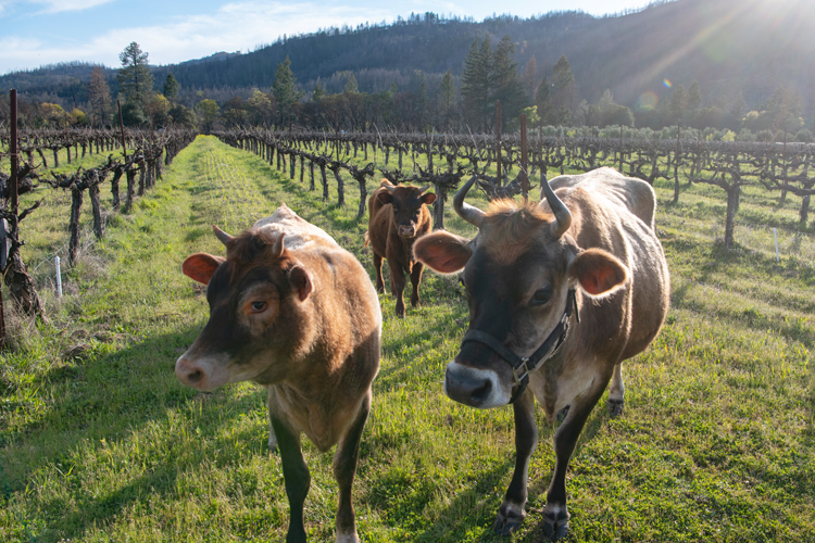 Farming for the Future at Frey Vineyards-Katrina Frey