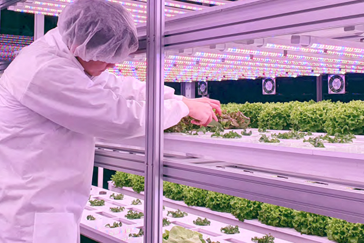 How to Spot Opportunities in Sustainable Food and Agriculture