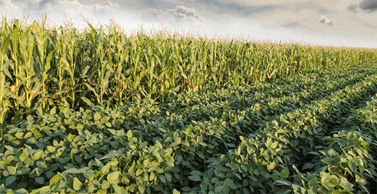 By 2025 widespread adoption of climate-smart AG practices would reduce US GHG emissions from 9.9 to 3.8 percent