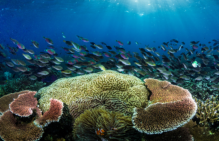 Coral and School of Fish - photo by Morgan Bennett-Smith