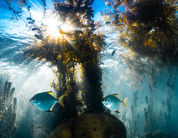 Kelp Forest and Fish - photo by Morgan Bennett-Smith